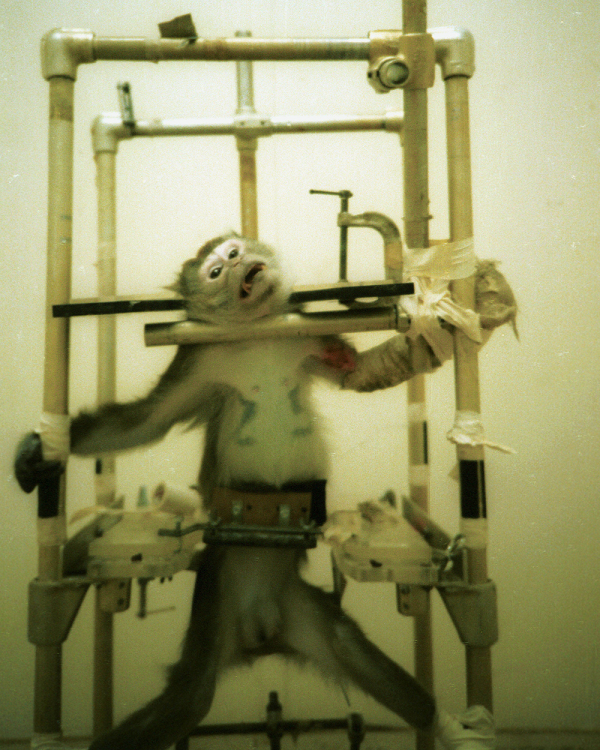 animal testing in laboratories